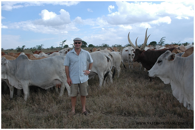 With Boran and Ancoli cattle at the Ol Pejeta embryo quarantine center.