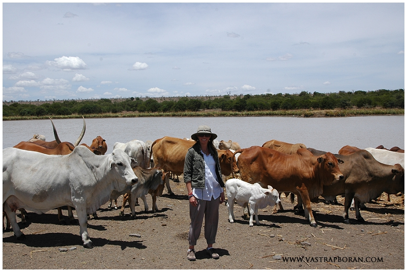 Marisa up close with a herd at Ol Pejeta.