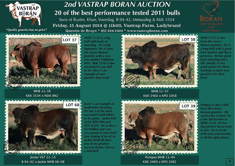 2011 Bulls (pg 4)
