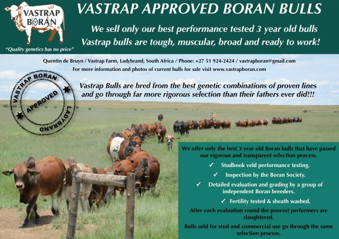 Vastrap Boran Bulls for Sale