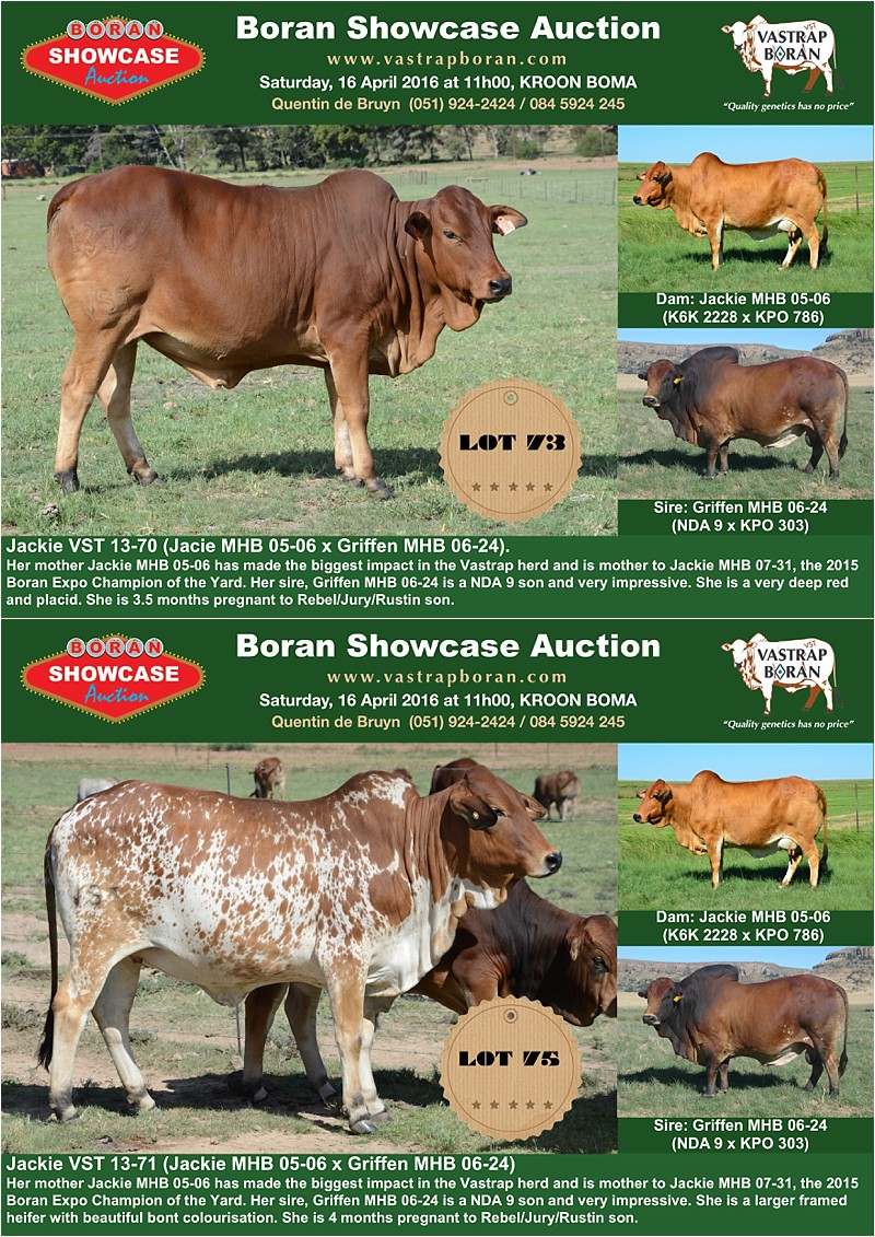 Showcase heifers_7