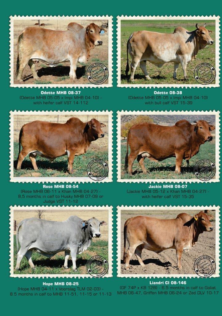 Vastrap_Boran_A3 Brochures_2015_2