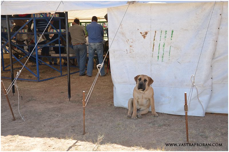 Our boerboel puppy, Duma was also part of the action!
