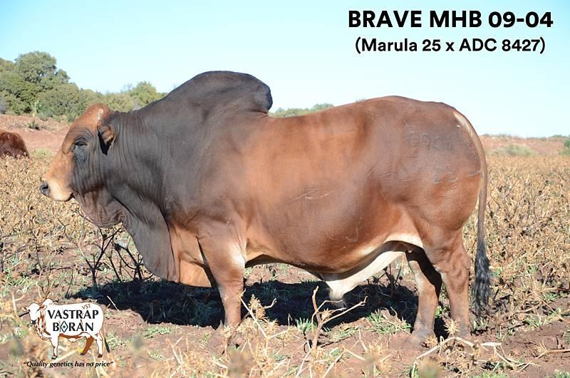 Brave MHB 09-04 (poster)