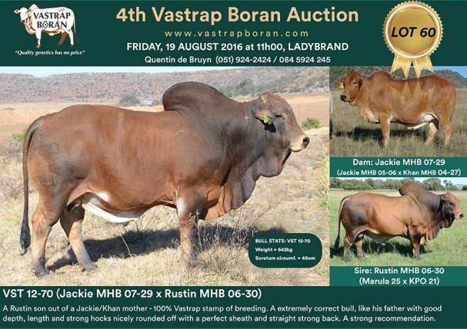 VST 12-70 sold for R55'000 to Gert Barnard (Chantemar Boran).