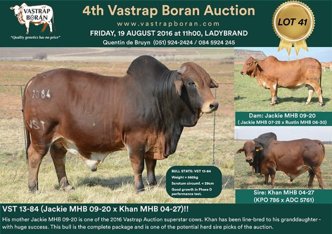 VST 13-84: The highest priced animal at the 2016 Vastrap Auction (R160'000).