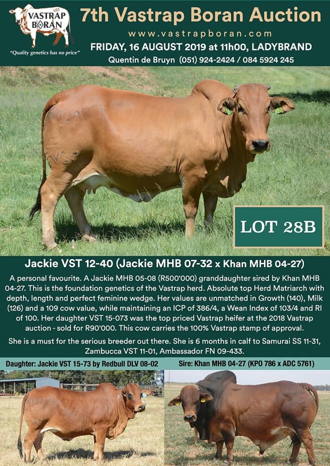 28B Jackie VST 12-40