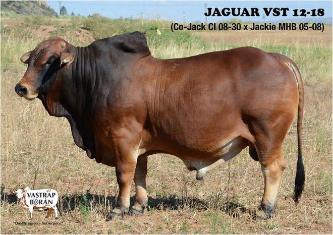 Jaguar VST 12-18