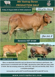 24A. Savanna VST 13-124_1